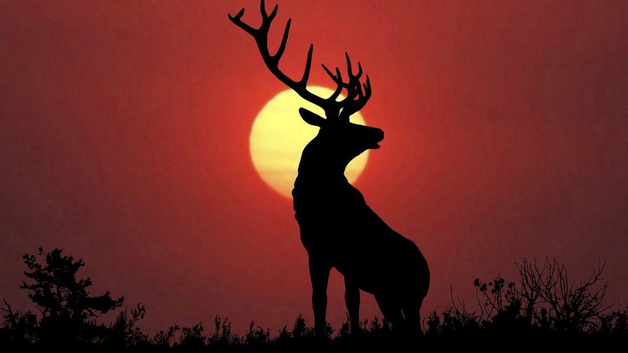 deer artwork wallpaper