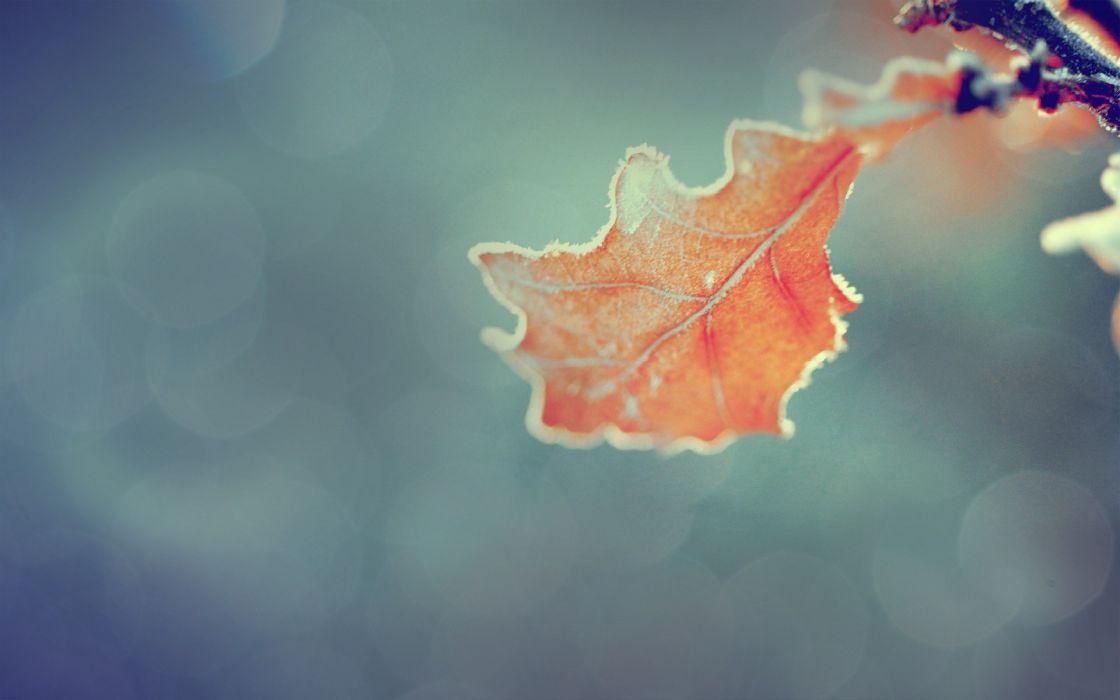nature orange leaves macro wallpaper