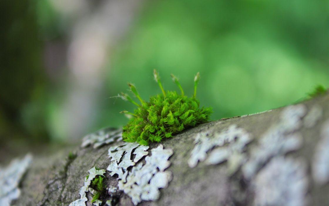nature trees moss macro depth of field logs wallpaper