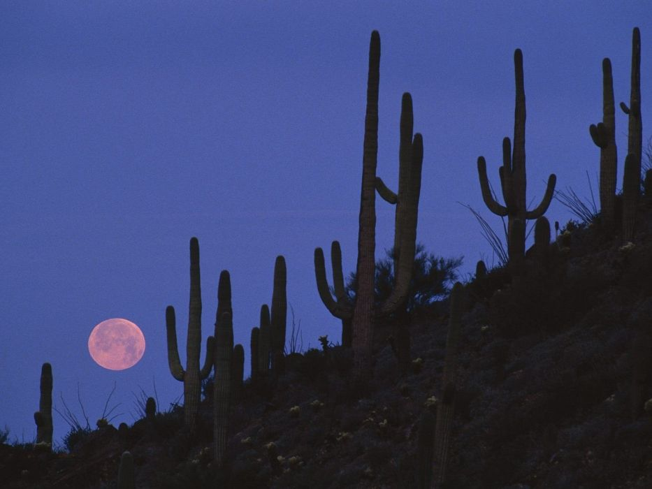 landscapes Arizona national Full Moon wallpaper