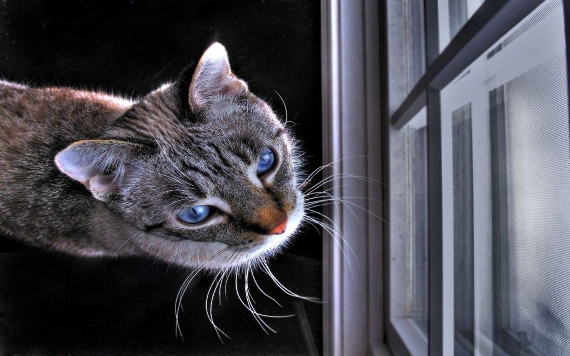 cats window wallpaper