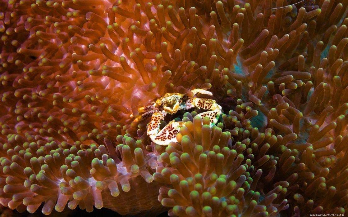 water fish underwater sea wallpaper