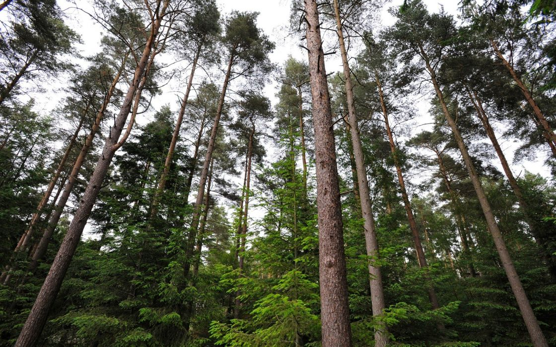 nature trees wallpaper