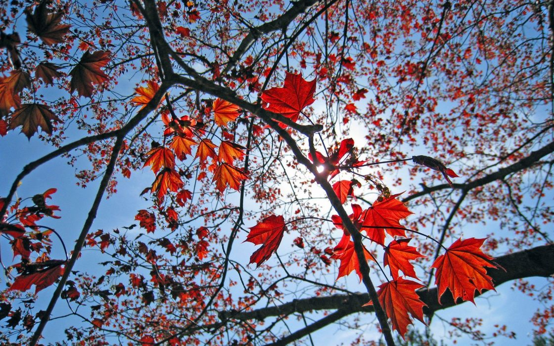 leaves spring skyscapes wallpaper