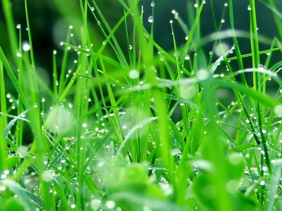 grass dew wallpaper