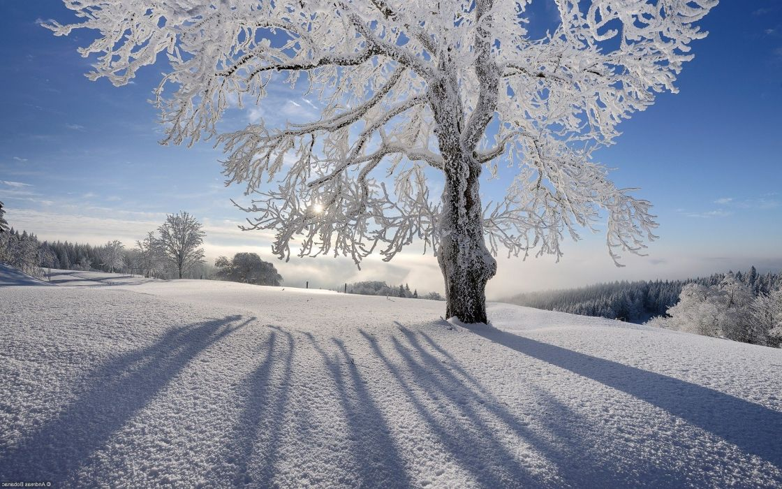 landscapes nature snow Sun shadows gray hair branches hoarfrost wallpaper
