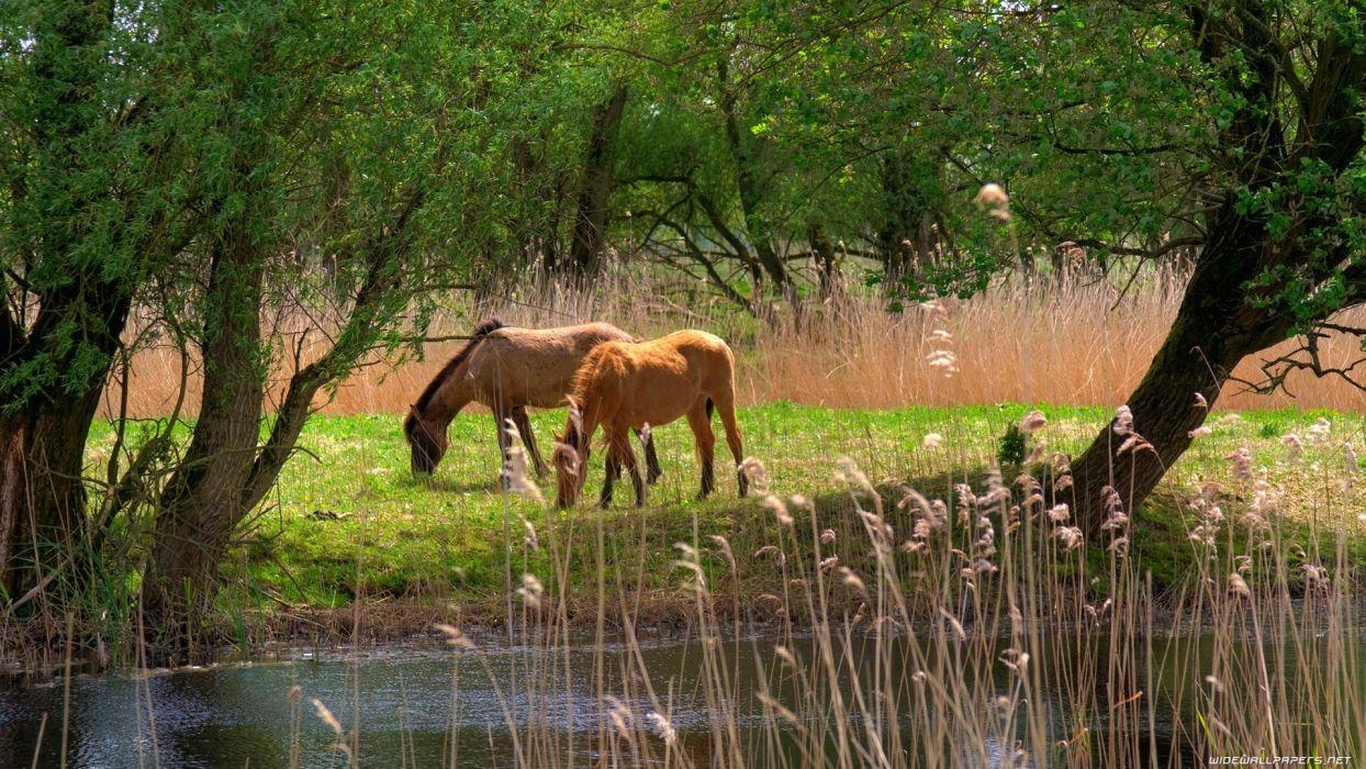 landscapes animals grass horses junk lakes land eating wallpaper