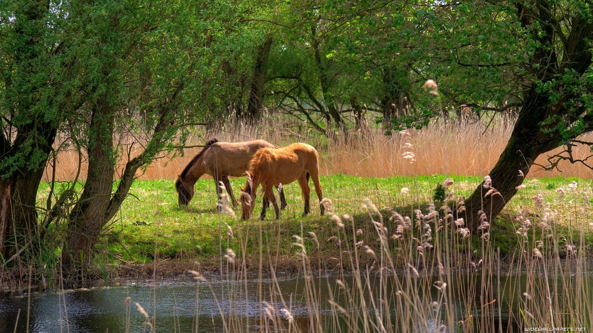 Paisajes De Animales: Landscapes Animals Grass Horses Junk Lakes Land Eating