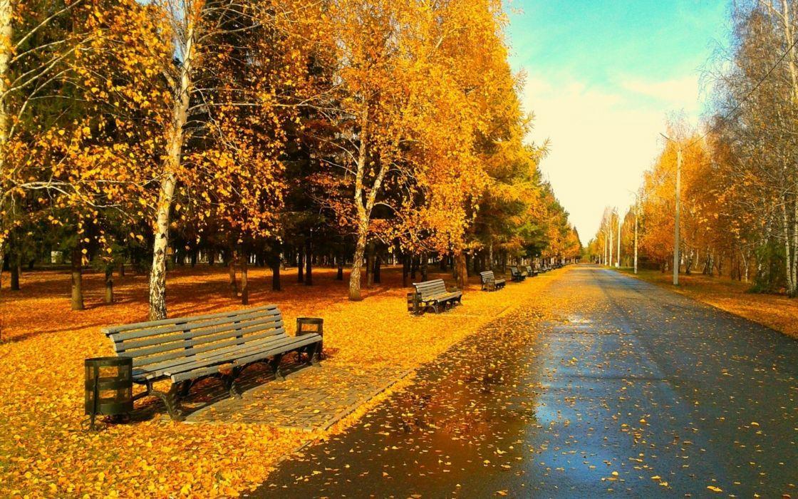 nature autumn streets wallpaper