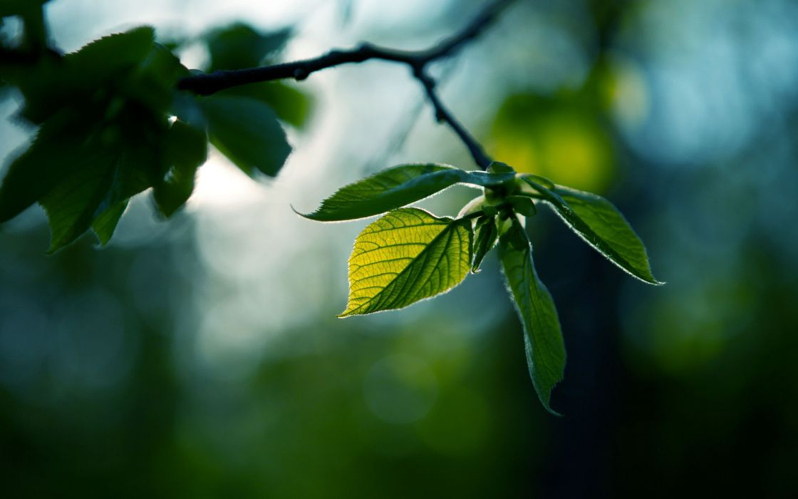 nature leaves depth of field wallpaper