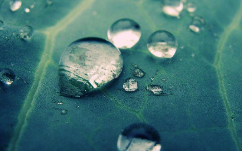 leaves water drops macro wallpaper