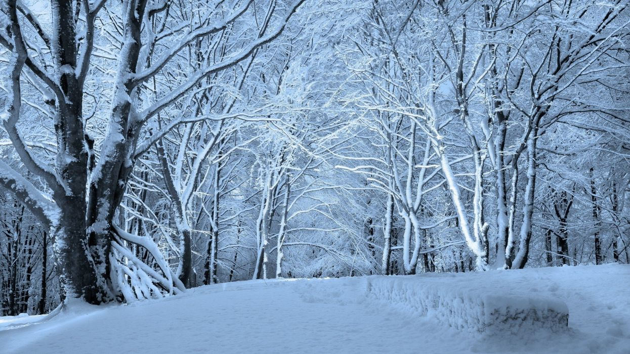 nature winter snow trees wallpaper