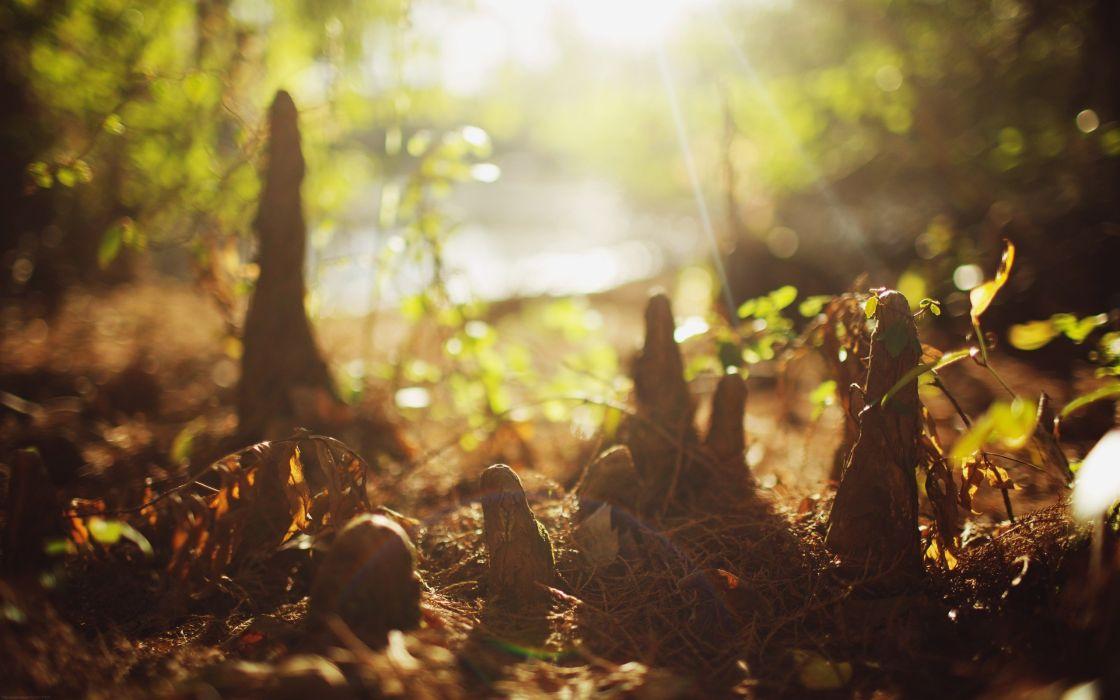 forests bokeh sunlight ground wallpaper