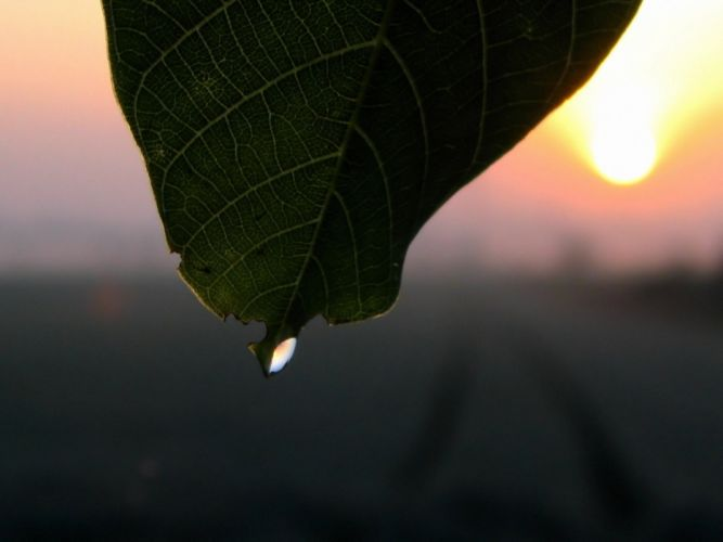 close-up leaves water drops wallpaper