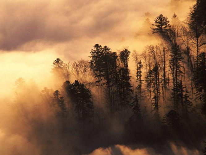 landscapes nature trees forests mist wallpaper