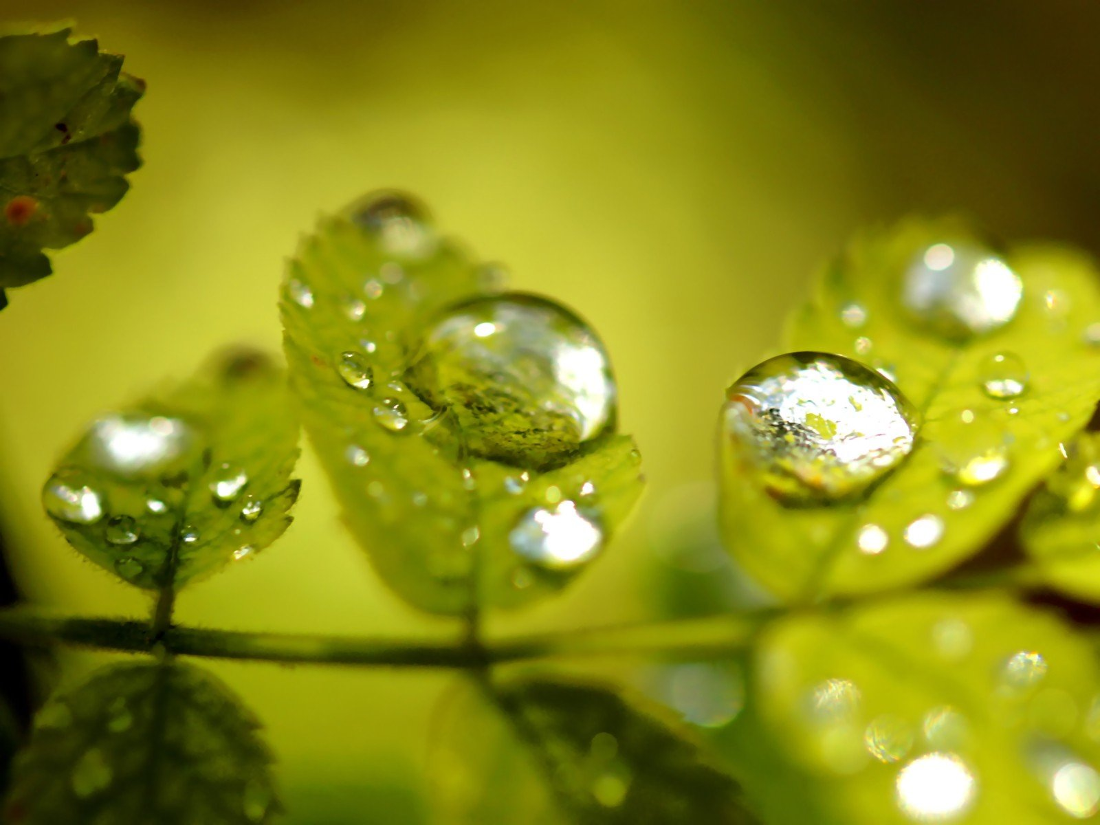 Green Nature Wall Leaves Grass Water Drops Flora Floral Wallpaper