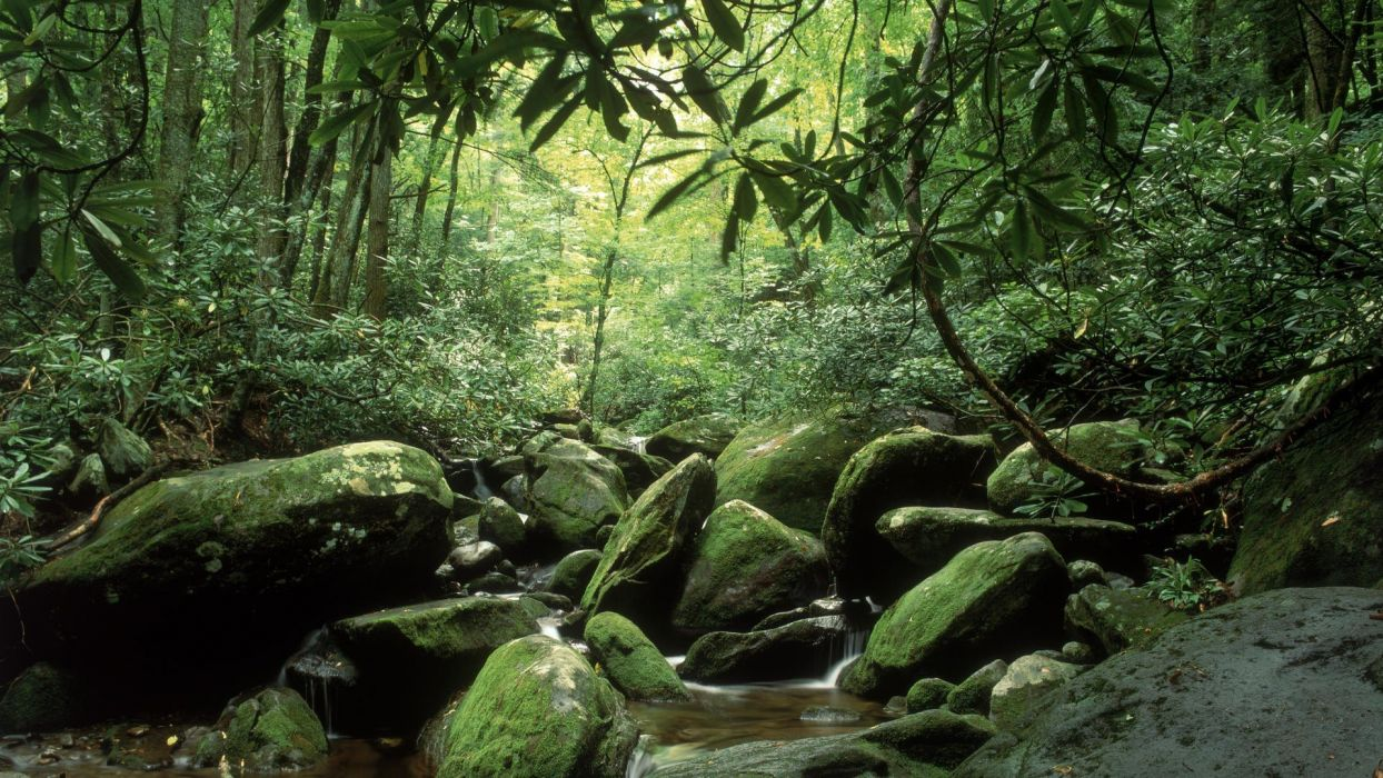 landscapes nature forests summer Tennessee forks National Park Great Smoky Mountains wallpaper