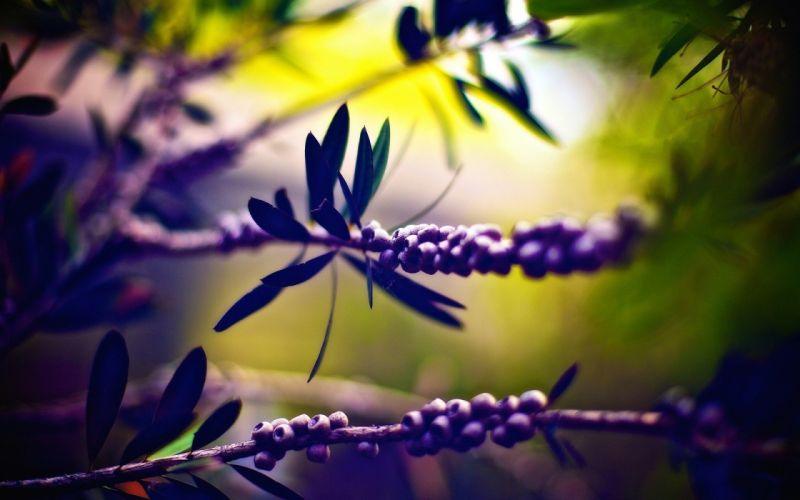 leaves plants berries wallpaper