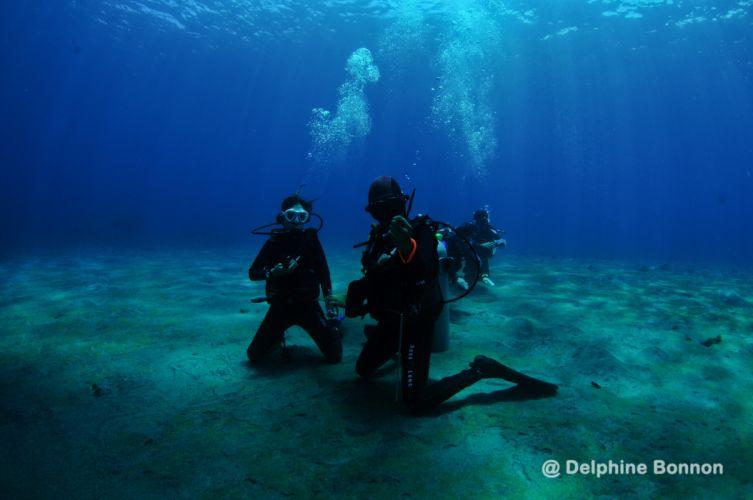 Diving in Bali wallpaper