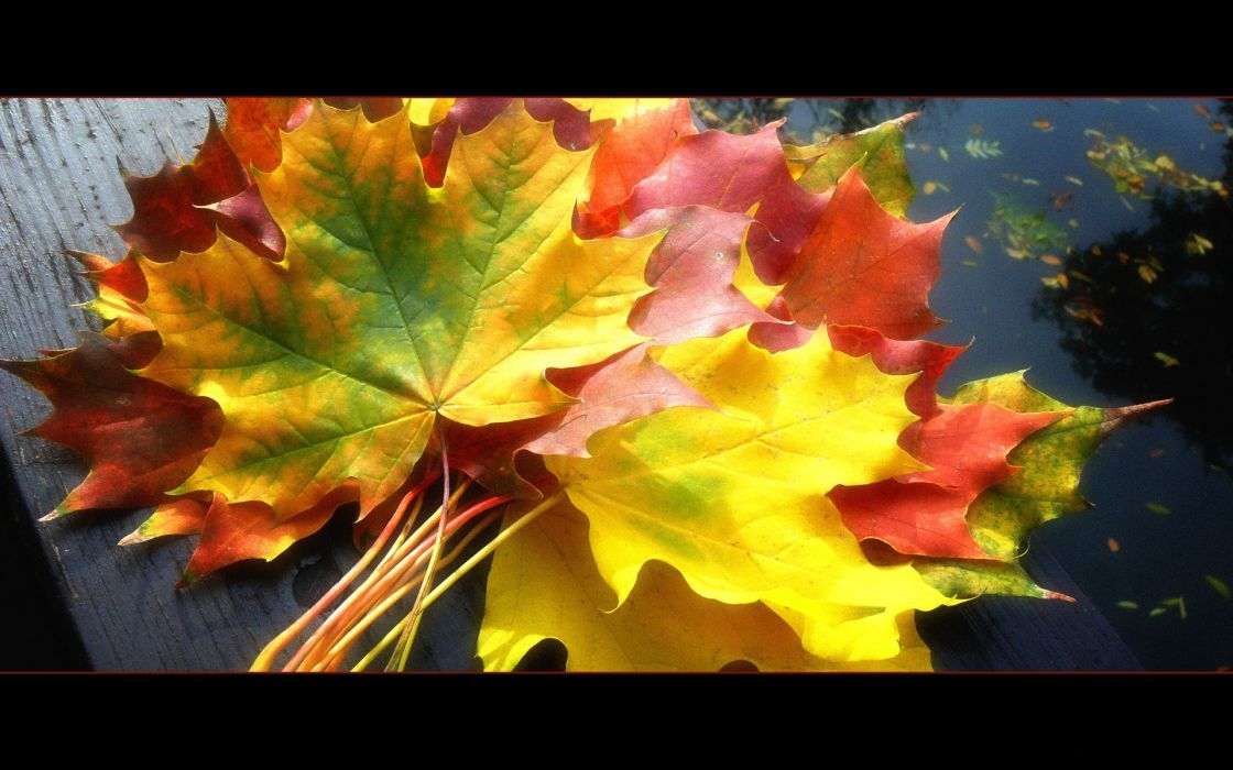 leaves fallen leaves wallpaper
