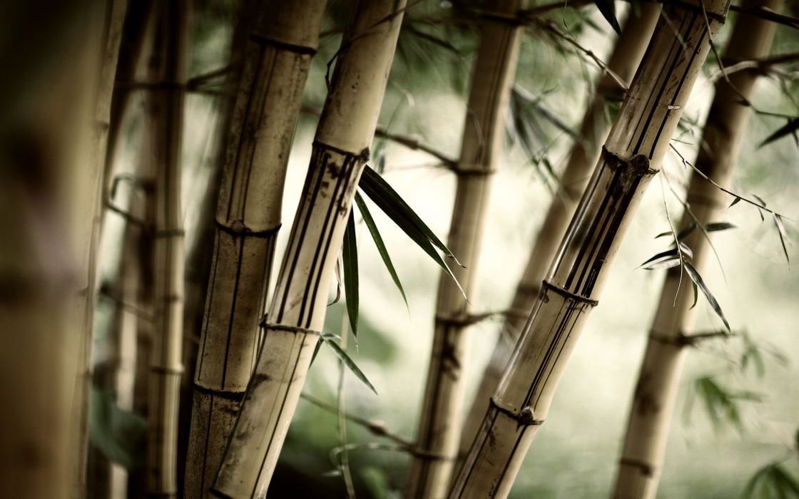 forests leaves bamboo plants wallpaper