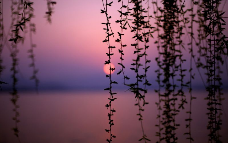 sunset nature trees lakes vines wallpaper