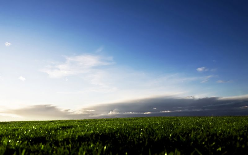 grass fields skyscapes wallpaper