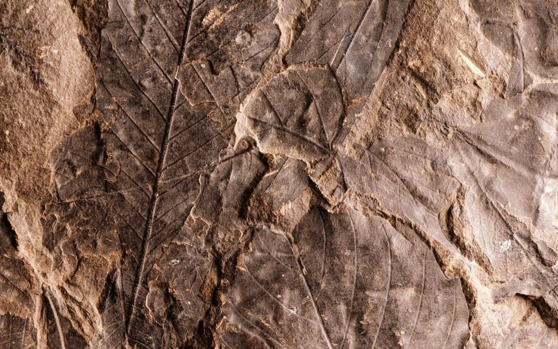 nature leaves fossil wallpaper