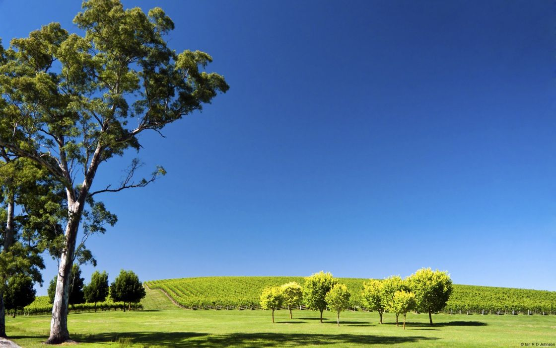 landscapes nature hills south australia vineyard wallpaper