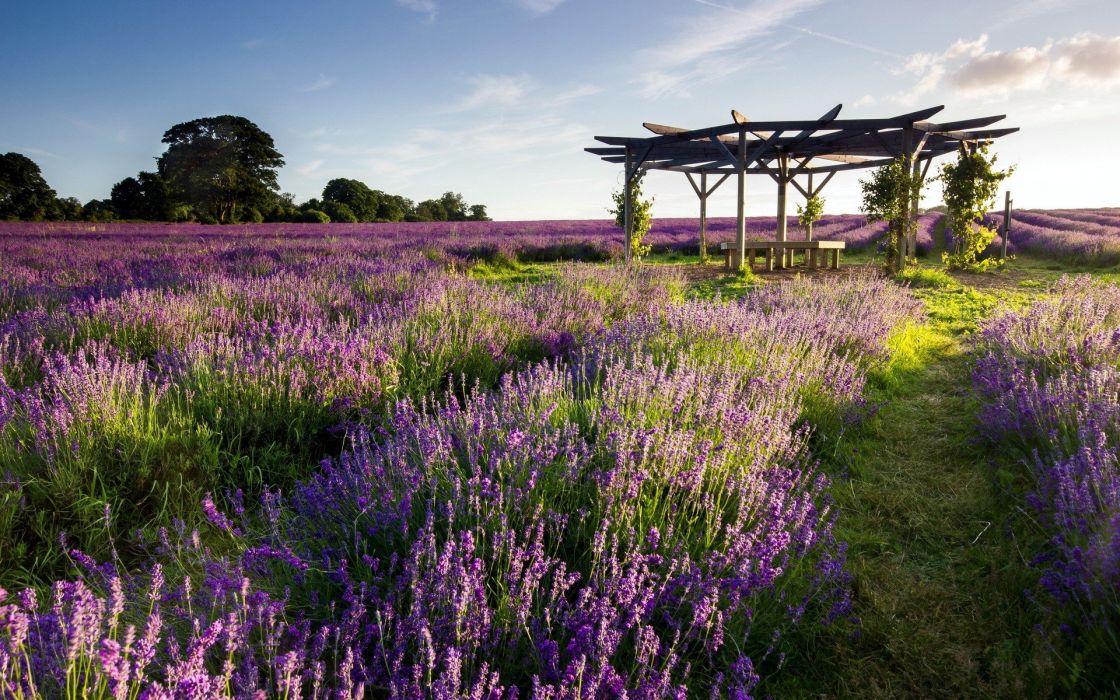landscapes nature lavender wallpaper
