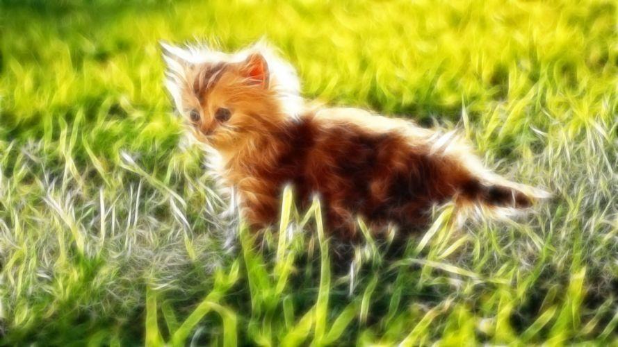 Fractalius grass kittens wallpaper