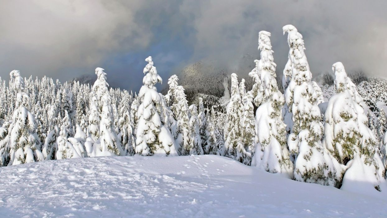 landscapes nature snow forests wallpaper