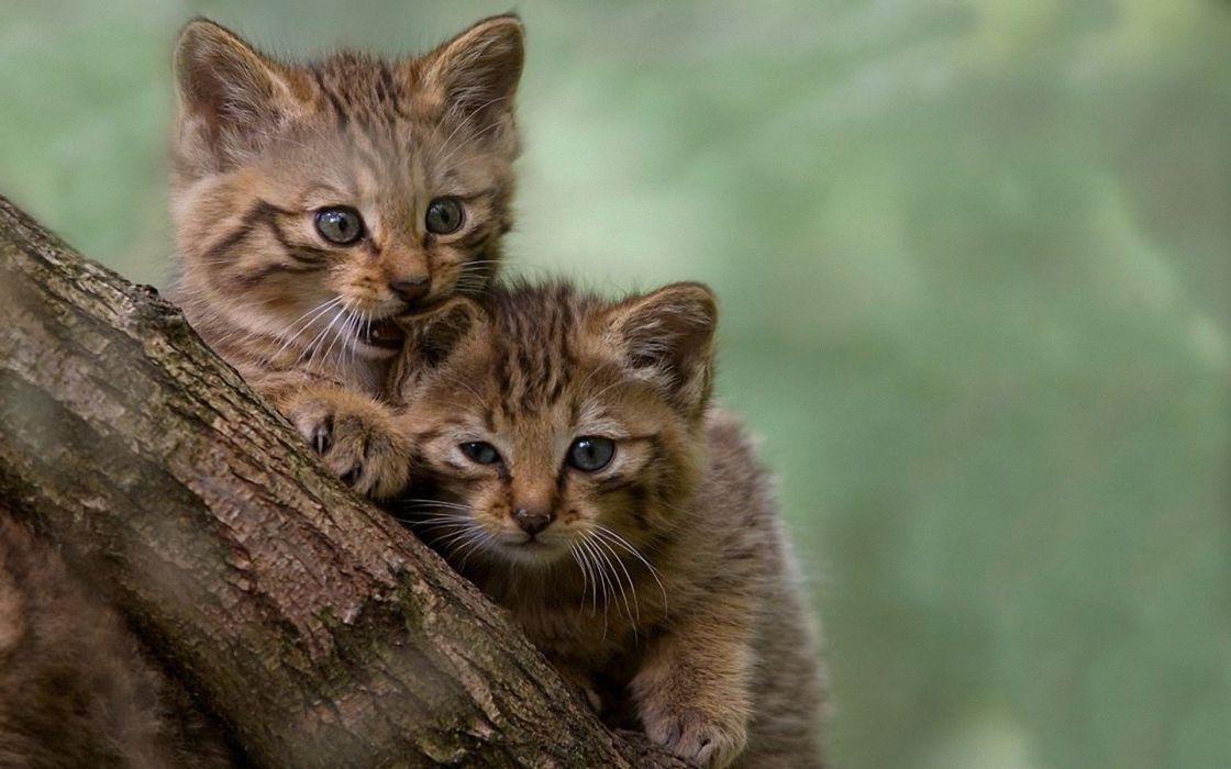 trees cats animals outdoors kittens wallpaper