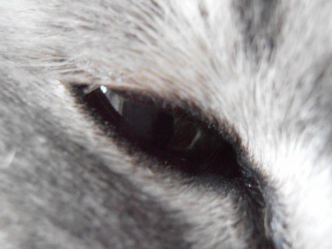 close-up cats feline kittens wallpaper