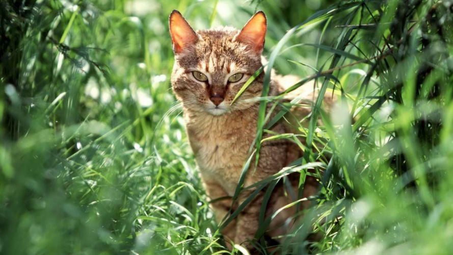 landscapes cats animals grass depth of field wallpaper