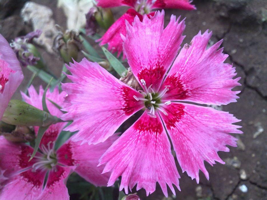 floor flowers pink wallpaper