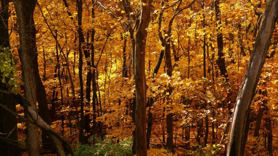 trees autumn leaves wallpaper