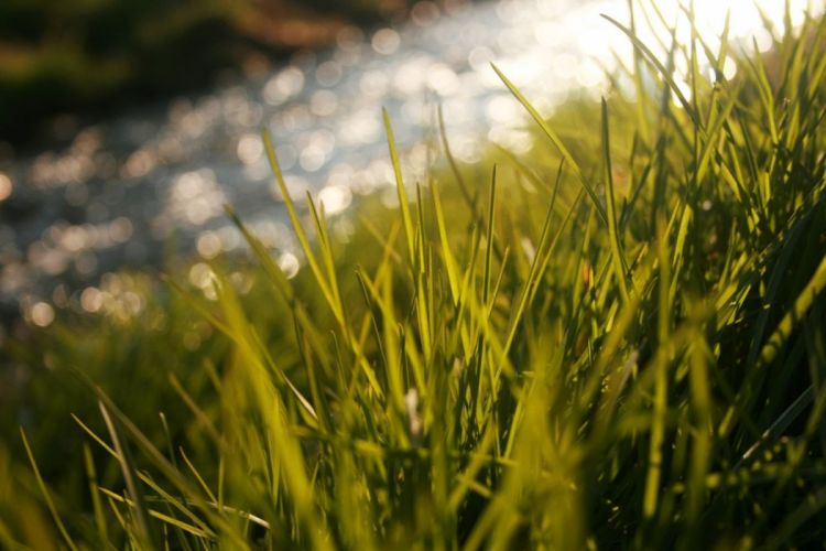 green grass wallpaper