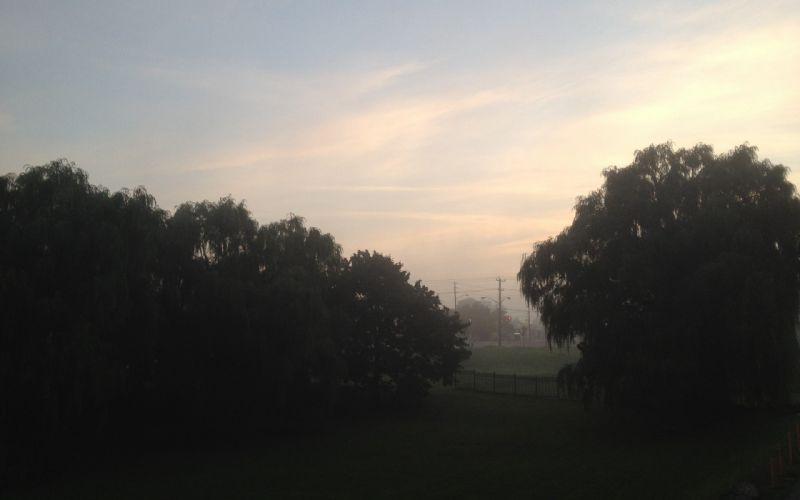 trees fog wallpaper
