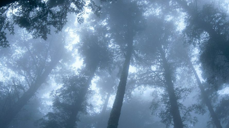 trees mist Oregon capes wallpaper