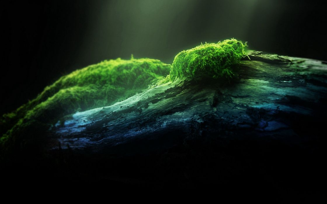 nature moss wallpaper
