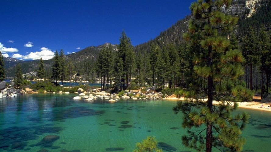 trees forests lakes wallpaper
