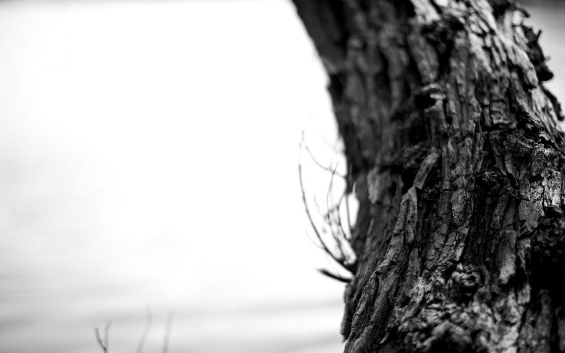 black and white landscapes nature bark trunk wallpaper