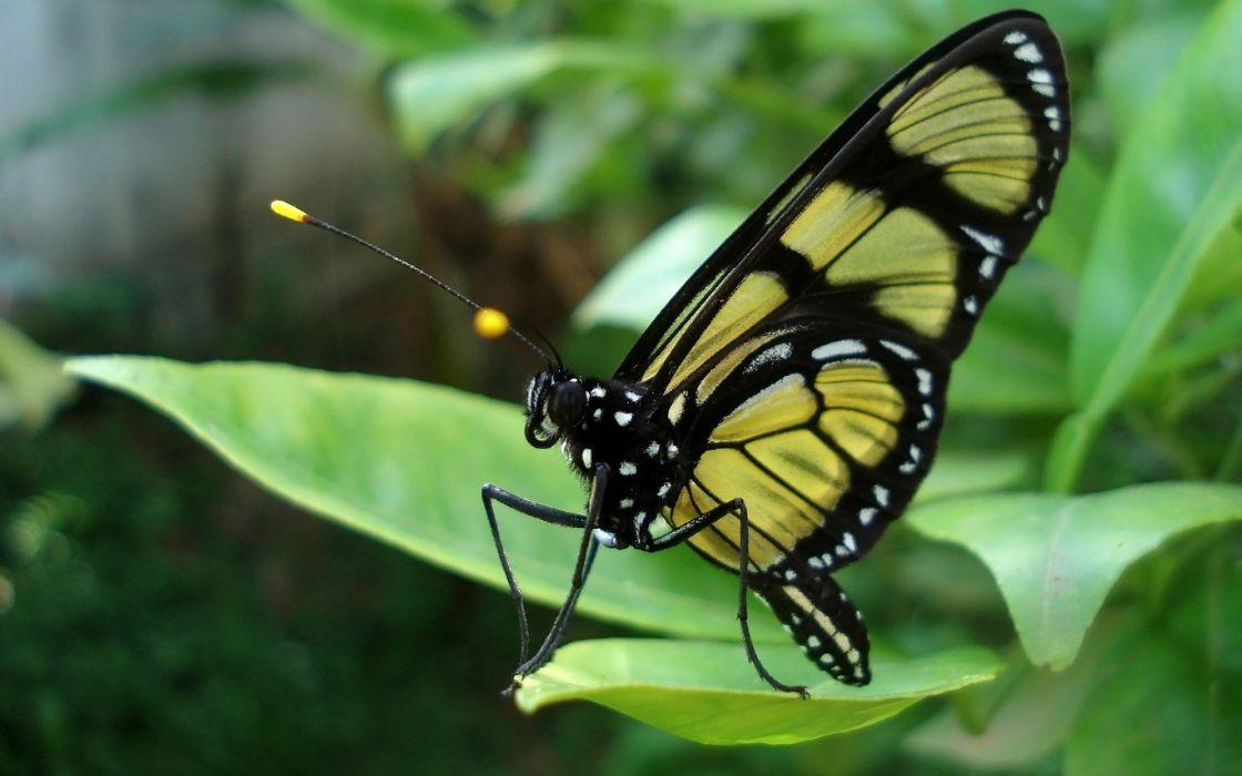 macro butterflies wallpaper