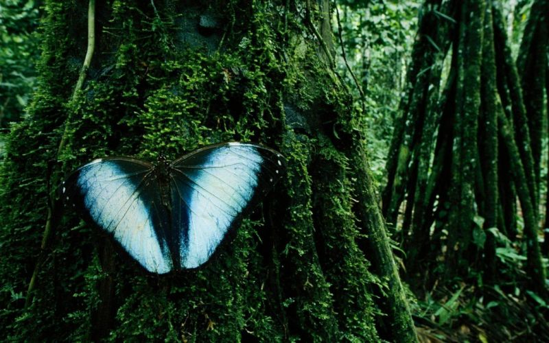 nature trees insects moss Bolivia butterflies wallpaper
