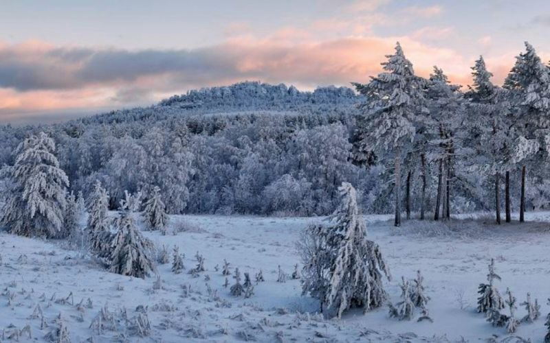 landscapes nature snow trees pine trees wallpaper