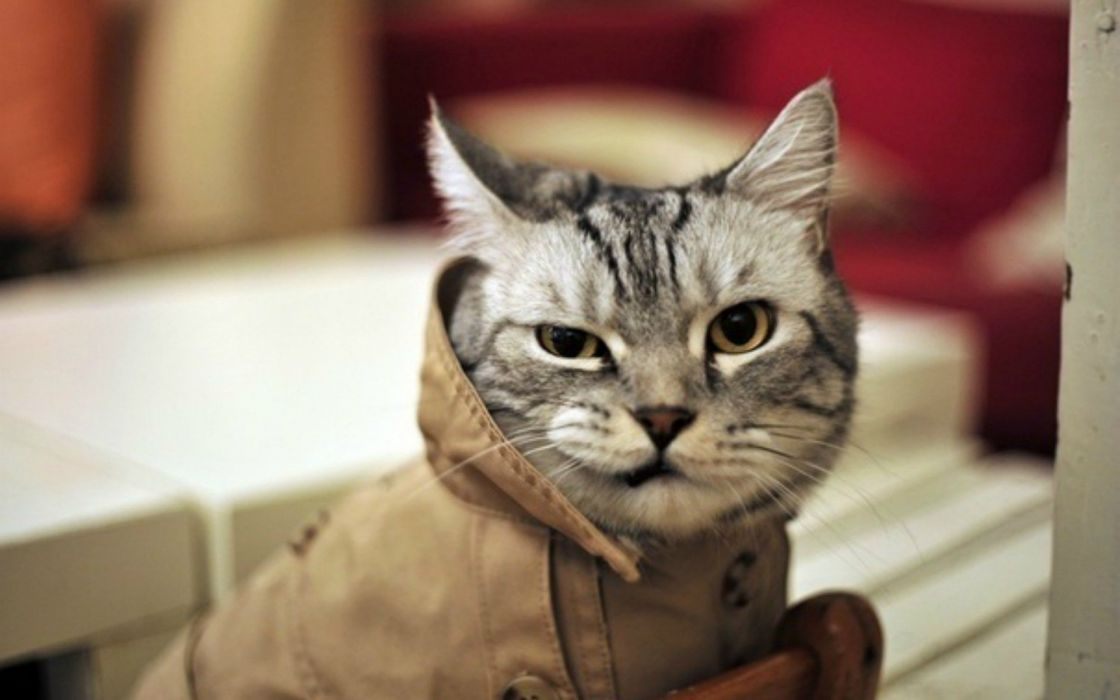cats animals funny fur hipster detective wink whiskers wallpaper