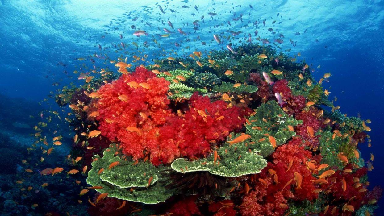 ocean south coral tropical fish Pacific wallpaper