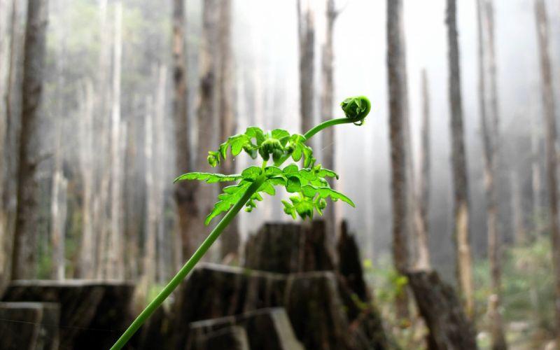 green nature trees plants ferns wallpaper