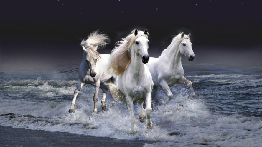 night stars surface surfing horses photo manipulation beaches wallpaper